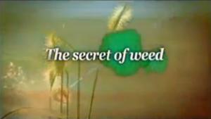 o segredos das ervas daninhas