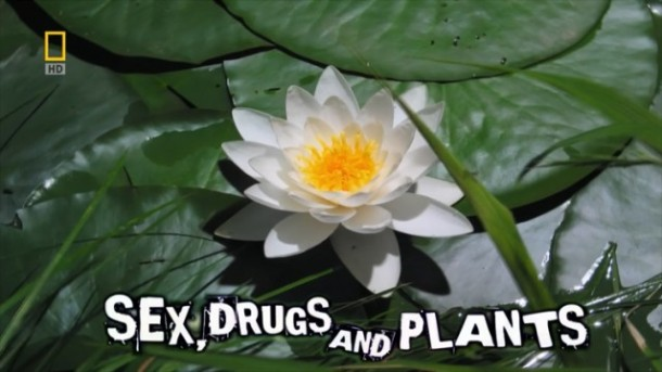 sex drugs and plants