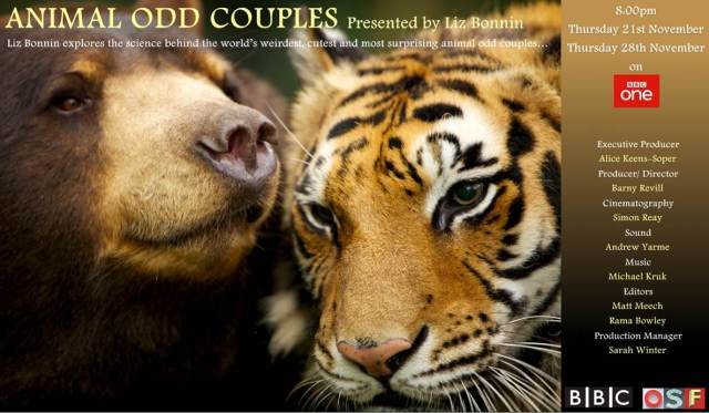 animal odd couples