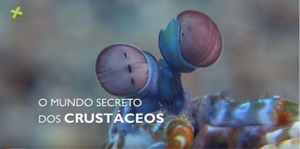 o mundo secreto dos crustáceos