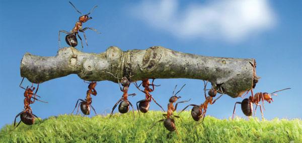o ponto de vista das formigas