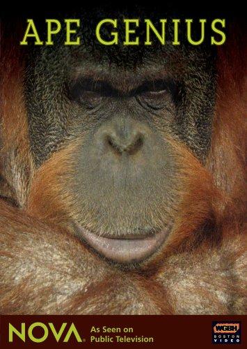 macacos-geniais