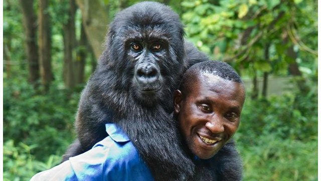 minha-vida-com-os-gorilas