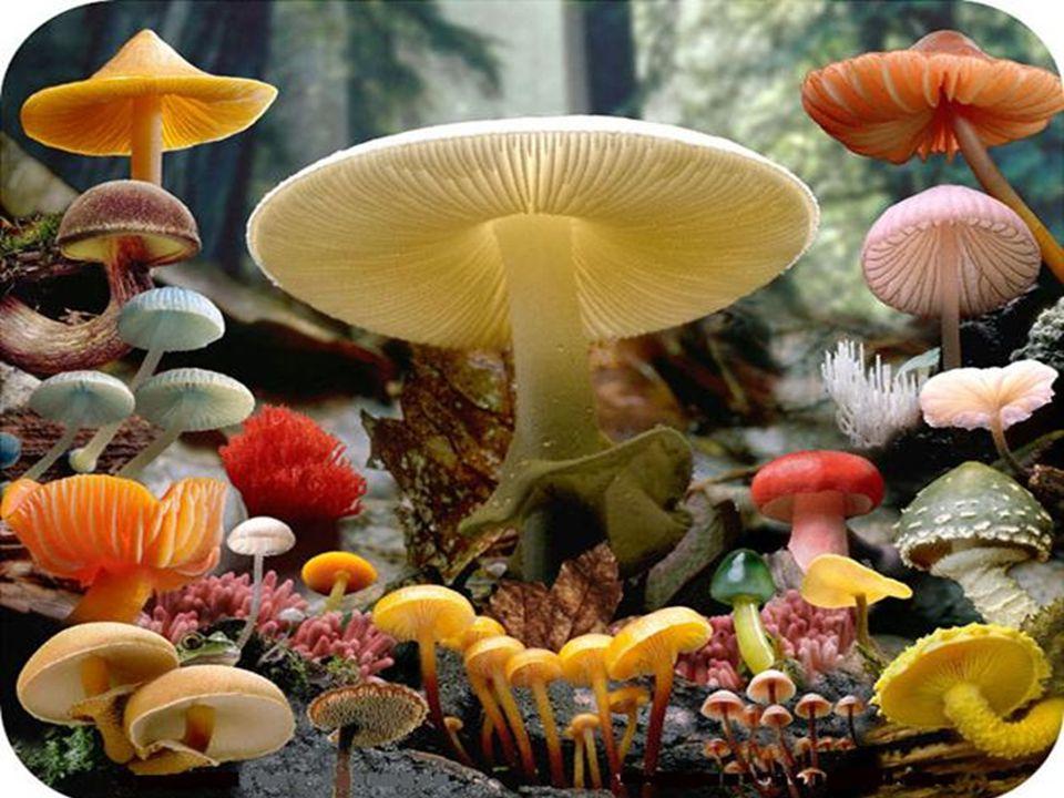 Resultado de imagem para fungos